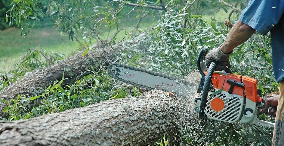 Tree Felling Pros Johannesburg